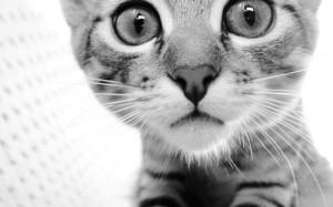 Cat-cats-32040775-1440-900